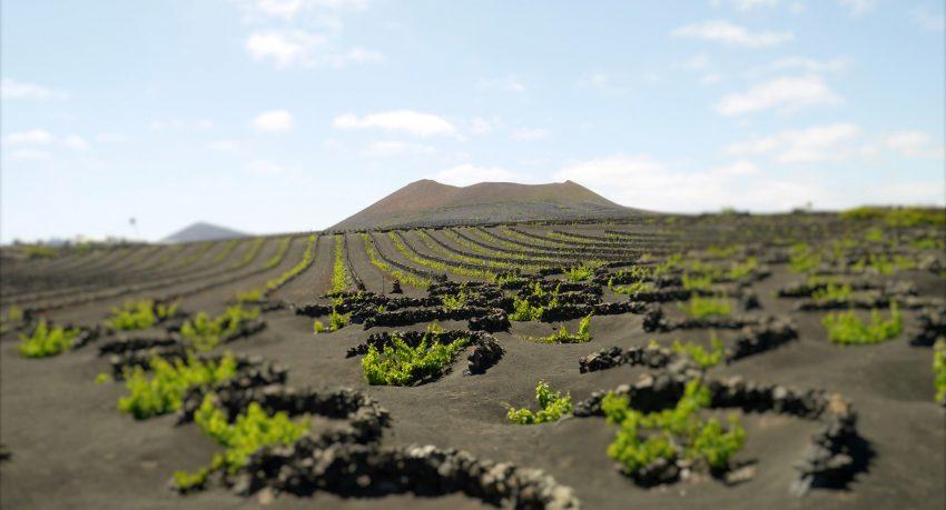 hoyo-zanja-cultivo-vino-lanzarote